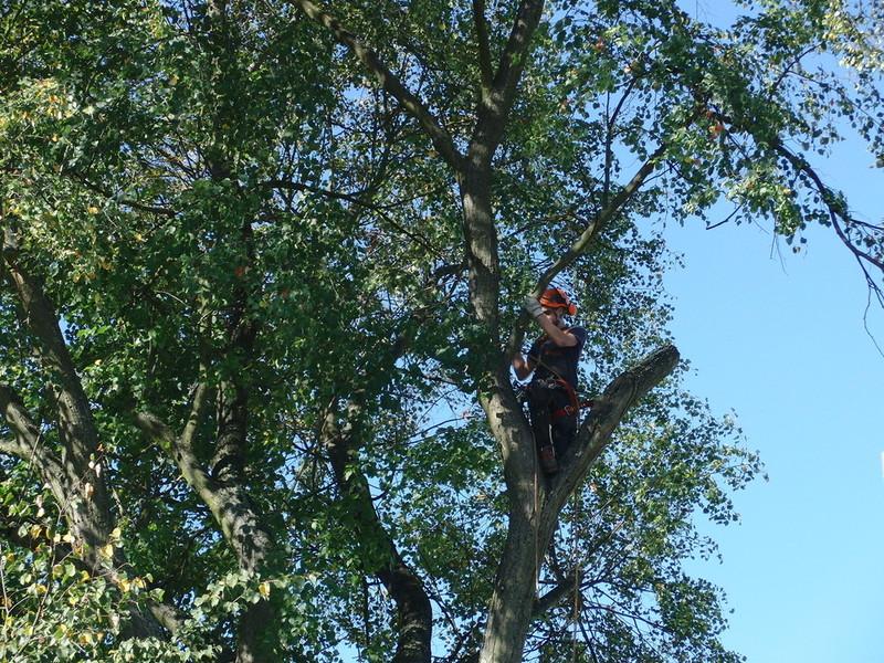 Kletterausrüstung Baum Fällen : Der holzsäger ihr händler für brennholz kaminholz anzündholz und